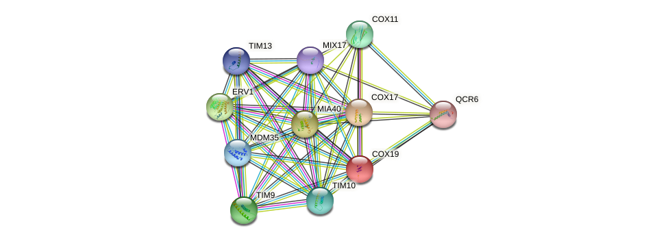 COX19 protein (Saccharomyces cerevisiae) - STRING interaction network
