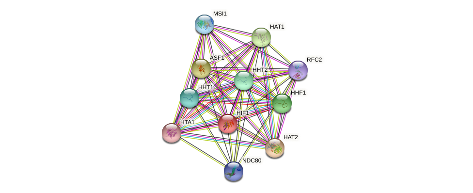 HIF1 protein (Saccharomyces cerevisiae) - STRING interaction network