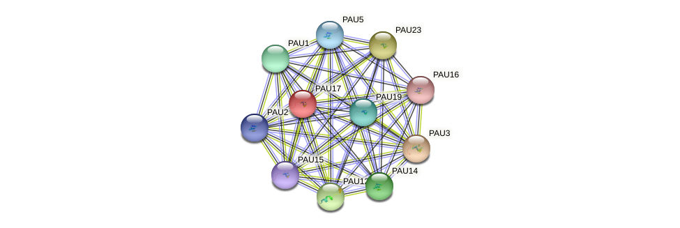 PAU17 protein (Saccharomyces cerevisiae) - STRING interaction network