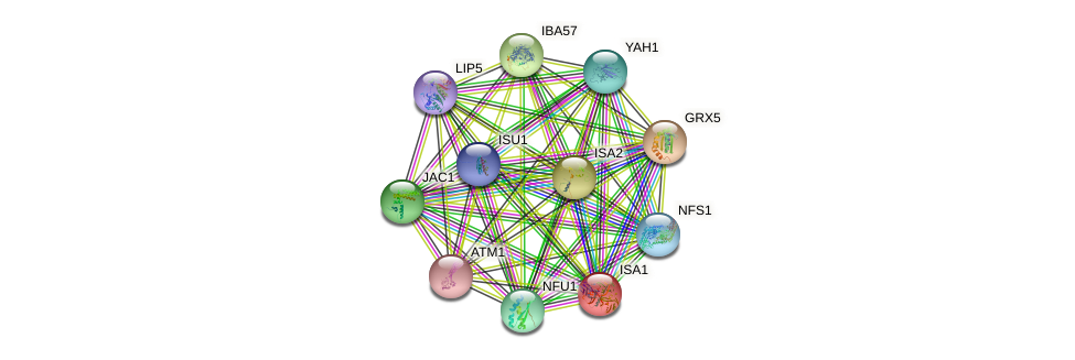 ISA1 protein (Saccharomyces cerevisiae) - STRING interaction network