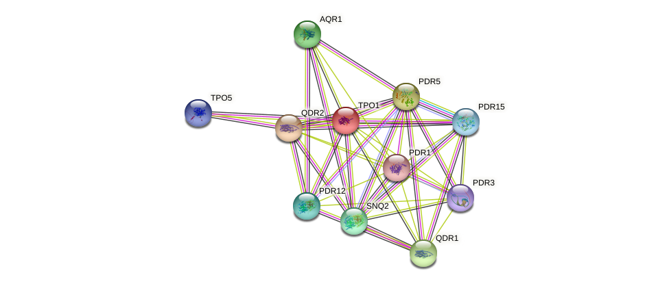TPO1 protein (Saccharomyces cerevisiae) - STRING interaction network