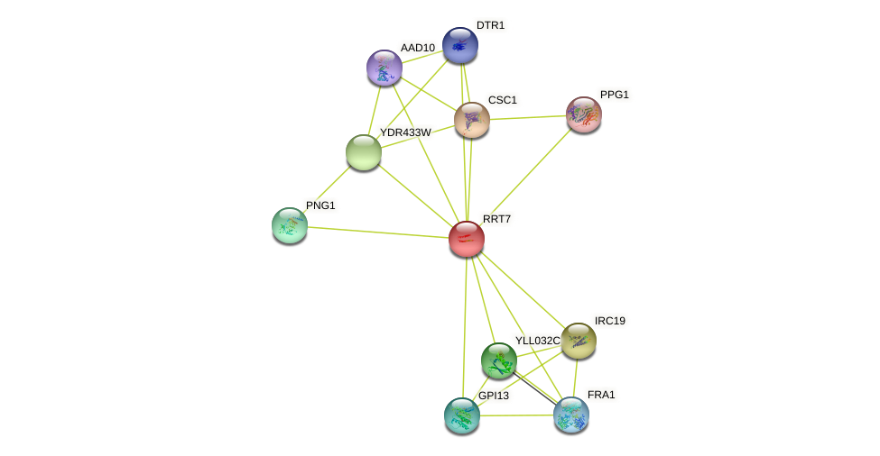RRT7 protein (Saccharomyces cerevisiae) - STRING interaction network