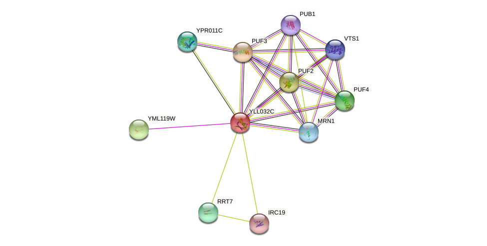 YLL032C protein (Saccharomyces cerevisiae) - STRING interaction network