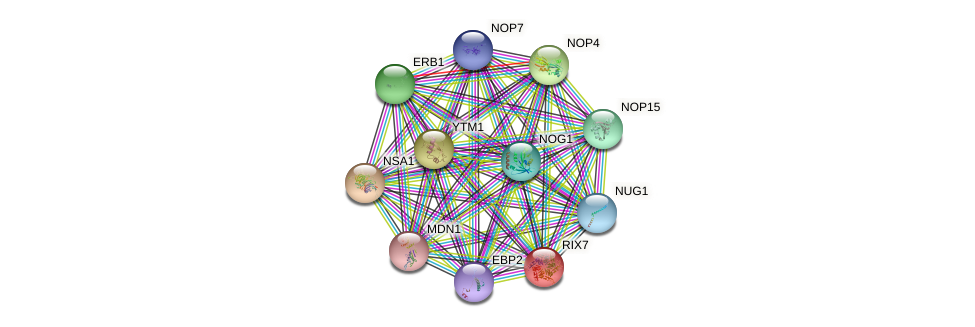 RIX7 protein (Saccharomyces cerevisiae) - STRING interaction network