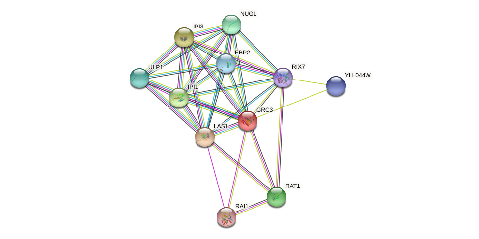 GRC3 protein (Saccharomyces cerevisiae) - STRING interaction network