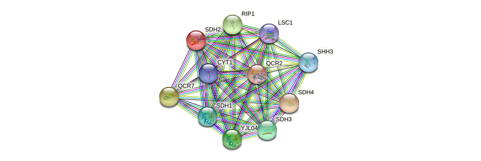 SDH2 protein (Saccharomyces cerevisiae) - STRING interaction network