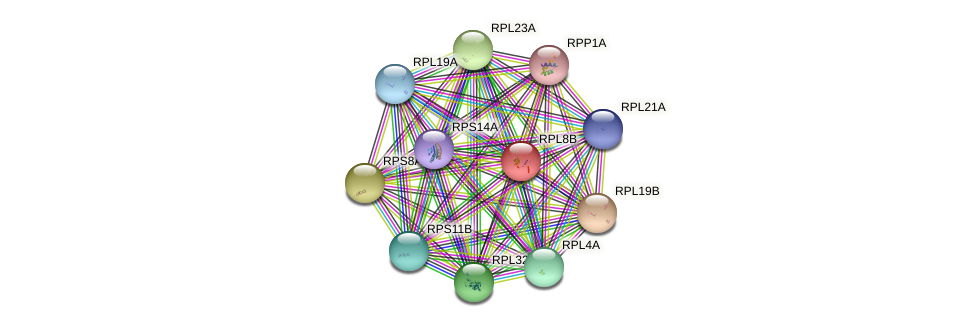 RPL8B protein (Saccharomyces cerevisiae) - STRING interaction network