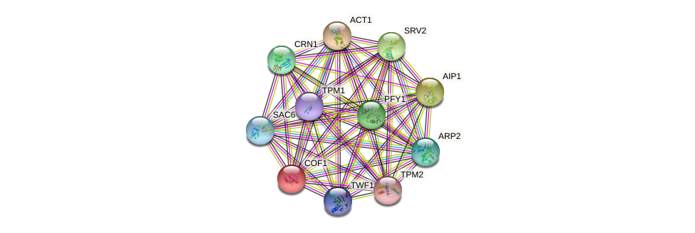 COF1 protein (Saccharomyces cerevisiae) - STRING interaction network