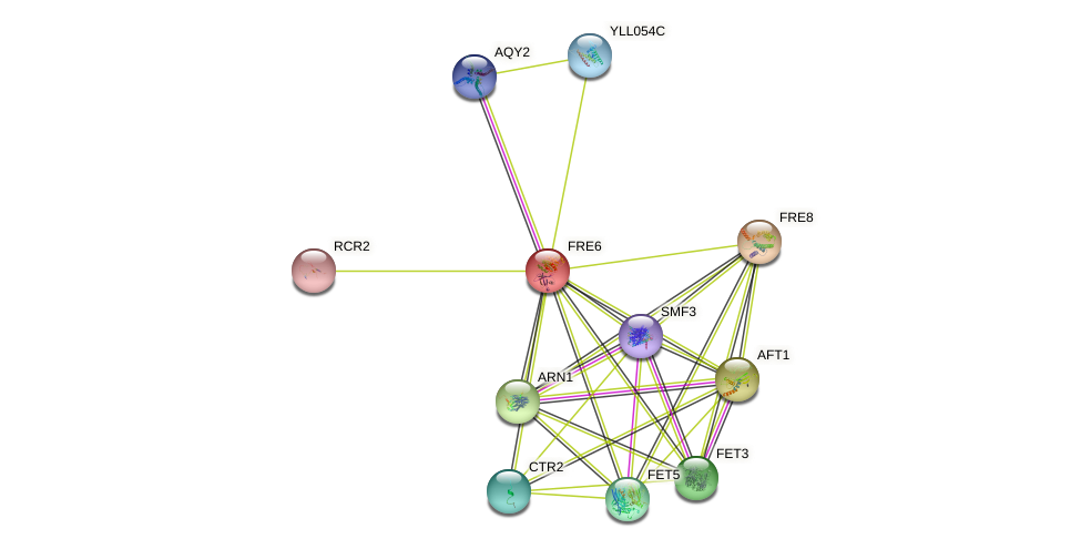 FRE6 protein (Saccharomyces cerevisiae) - STRING interaction network
