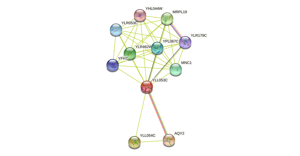 YLL053C protein (Saccharomyces cerevisiae) - STRING interaction network