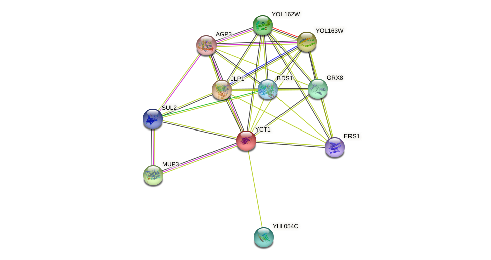 YCT1 protein (Saccharomyces cerevisiae) - STRING interaction network