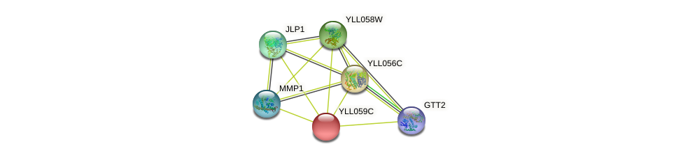 YLL059C protein (Saccharomyces cerevisiae) - STRING interaction network