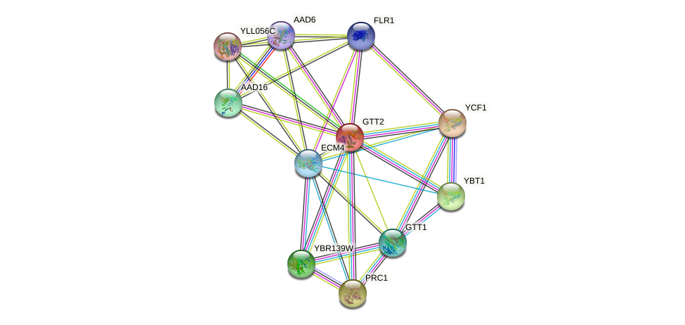 GTT2 protein (Saccharomyces cerevisiae) - STRING interaction network