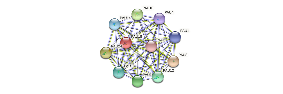 PAU18 protein (Saccharomyces cerevisiae) - STRING interaction network