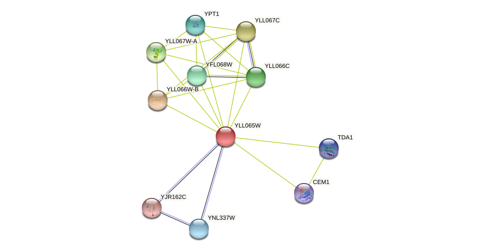 YLL065W protein (Saccharomyces cerevisiae) - STRING interaction network