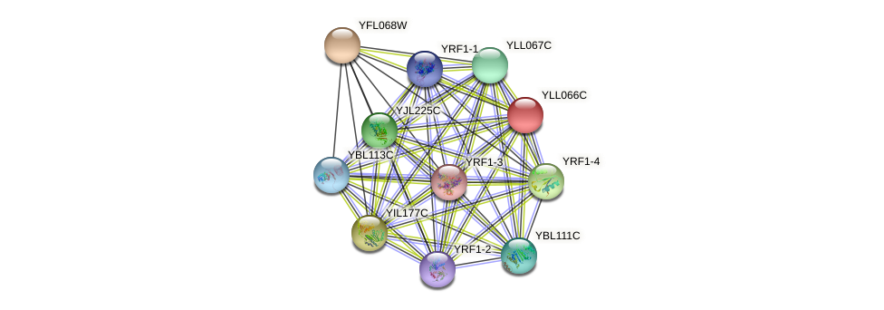 YLL066C protein (Saccharomyces cerevisiae) - STRING interaction network
