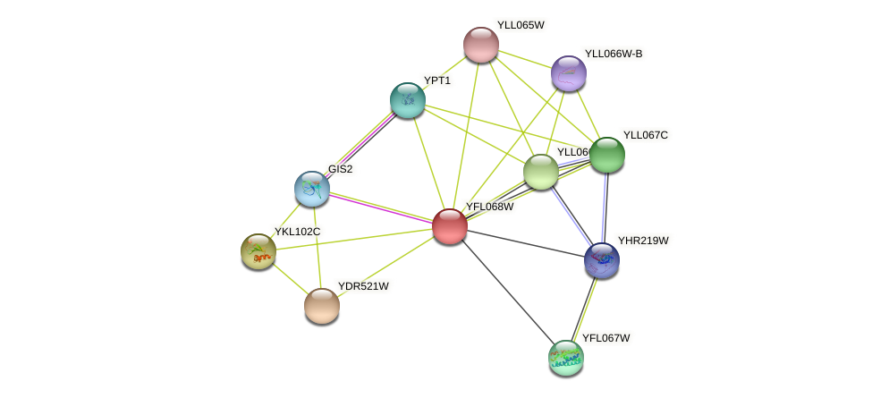 YFL068W protein (Saccharomyces cerevisiae) - STRING interaction network