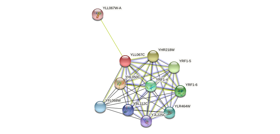 YLL067C protein (Saccharomyces cerevisiae) - STRING interaction network