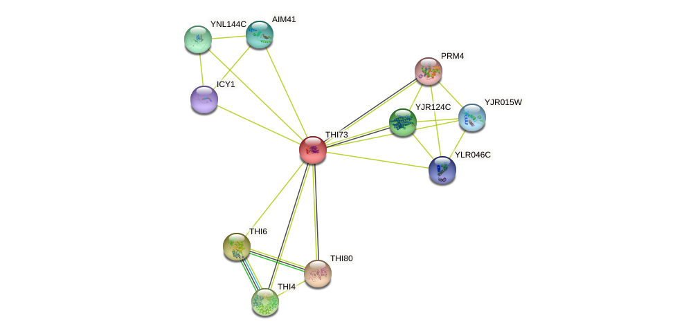 THI73 protein (Saccharomyces cerevisiae) - STRING interaction network