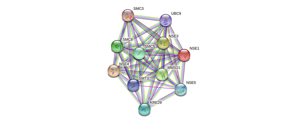 NSE1 protein (Saccharomyces cerevisiae) - STRING interaction network
