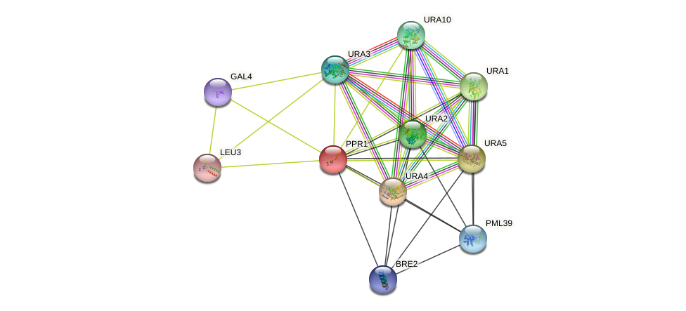 PPR1 protein (Saccharomyces cerevisiae) - STRING interaction network