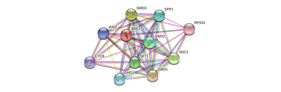 BRE2 protein (Saccharomyces cerevisiae) - STRING interaction network