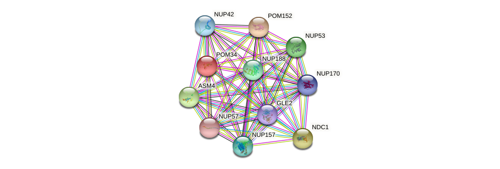 POM34 protein (Saccharomyces cerevisiae) - STRING interaction network