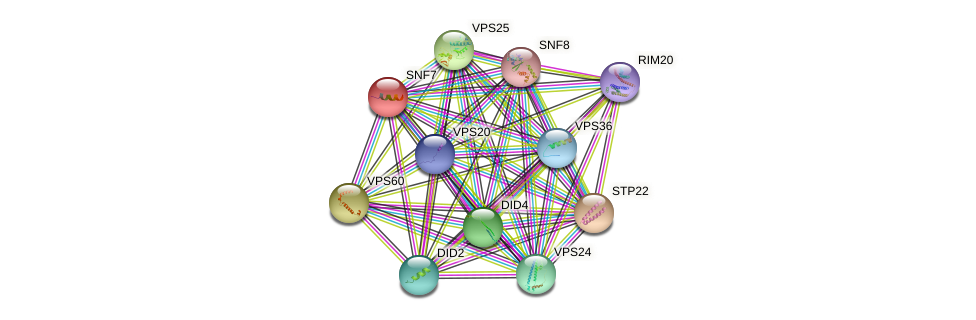 SNF7 protein (Saccharomyces cerevisiae) - STRING interaction network