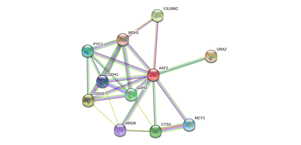 AAT2 protein (Saccharomyces cerevisiae) - STRING interaction network