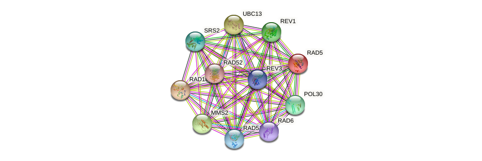 RAD5 protein (Saccharomyces cerevisiae) - STRING interaction network
