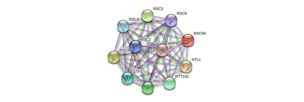 RSC58 protein (Saccharomyces cerevisiae) - STRING interaction network