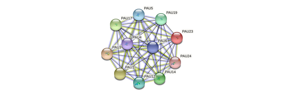 PAU23 protein (Saccharomyces cerevisiae) - STRING interaction network