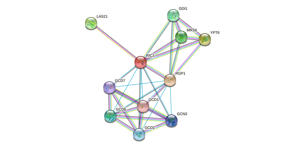 RIC1 protein (Saccharomyces cerevisiae) - STRING interaction network