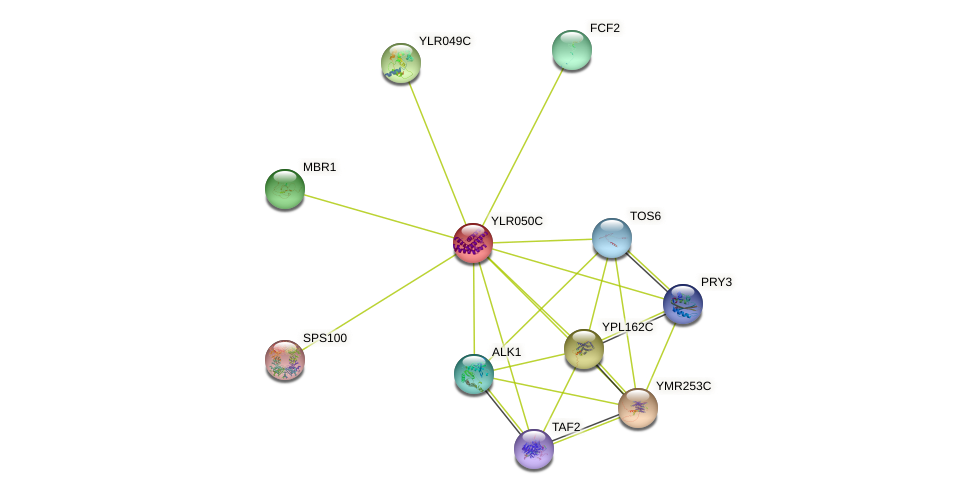 YLR050C protein (Saccharomyces cerevisiae) - STRING interaction network