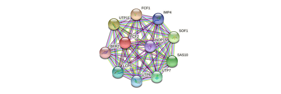 FCF2 protein (Saccharomyces cerevisiae) - STRING interaction network