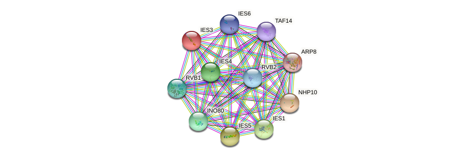 IES3 protein (Saccharomyces cerevisiae) - STRING interaction network