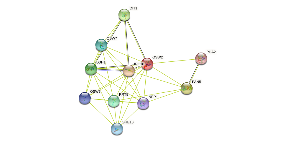 OSW2 protein (Saccharomyces cerevisiae) - STRING interaction network