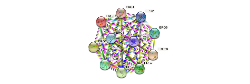 ERG3 protein (Saccharomyces cerevisiae) - STRING interaction network
