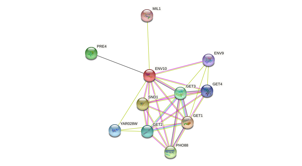 ENV10 protein (Saccharomyces cerevisiae) - STRING interaction network