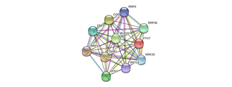 FYV7 protein (Saccharomyces cerevisiae) - STRING interaction network