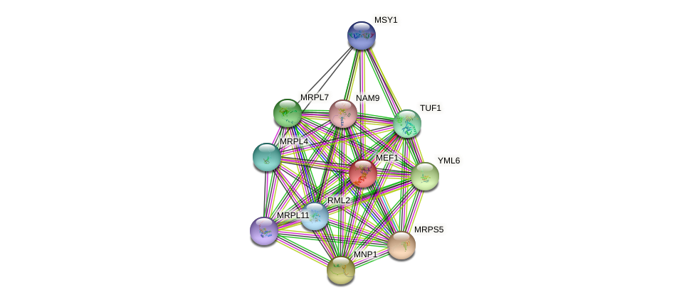 MEF1 protein (Saccharomyces cerevisiae) - STRING interaction network