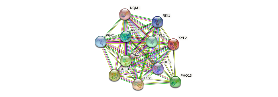 XYL2 protein (Saccharomyces cerevisiae) - STRING interaction network