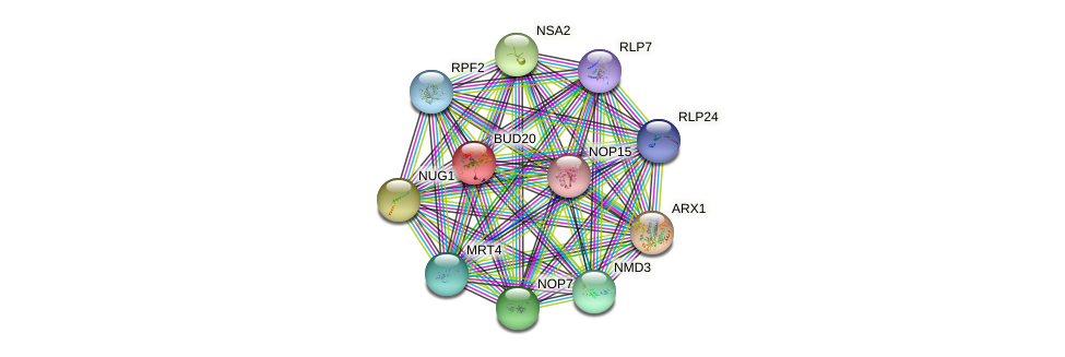 BUD20 protein (Saccharomyces cerevisiae) - STRING interaction network