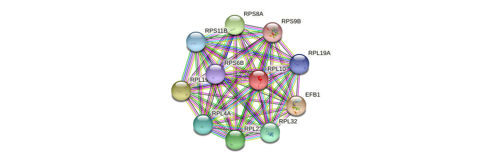RPL10 protein (Saccharomyces cerevisiae) - STRING interaction network