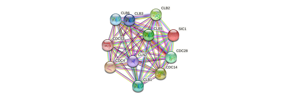 SIC1 protein (Saccharomyces cerevisiae) - STRING interaction network