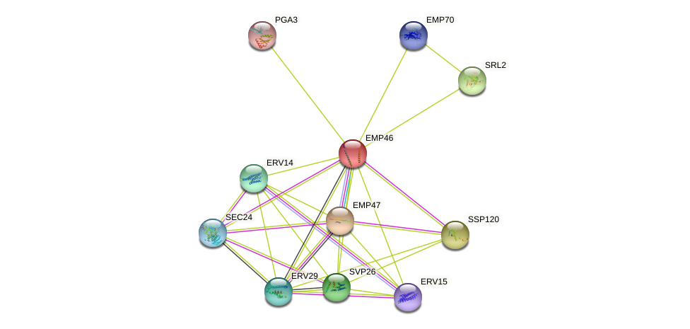 EMP46 protein (Saccharomyces cerevisiae) - STRING interaction network
