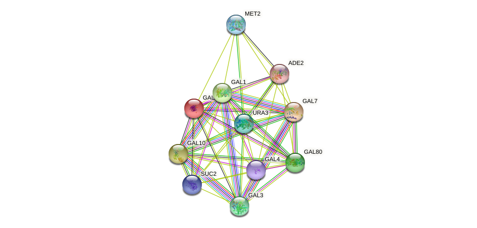 GAL2 protein (Saccharomyces cerevisiae) - STRING interaction network