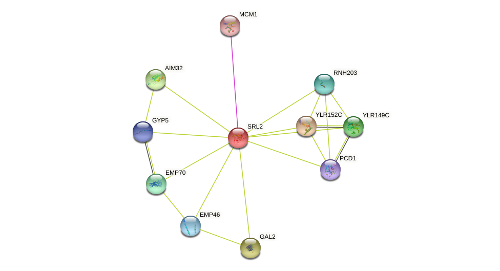 SRL2 protein (Saccharomyces cerevisiae) - STRING interaction network