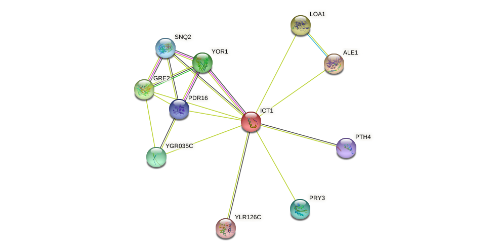ICT1 protein (Saccharomyces cerevisiae) - STRING interaction network
