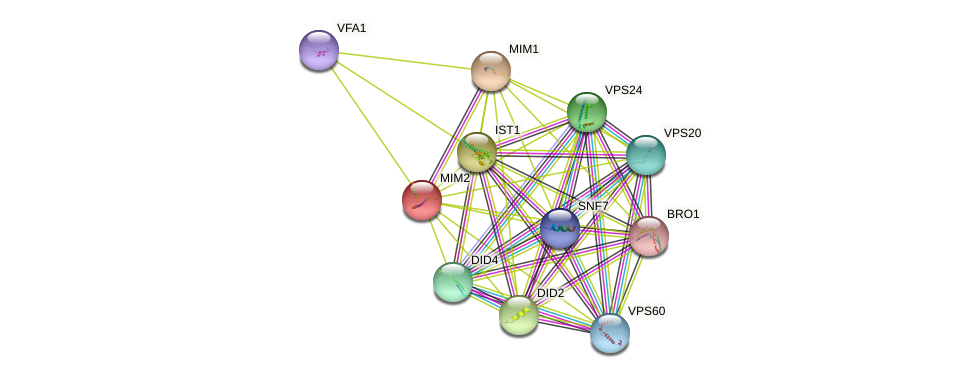 MIM2 protein (Saccharomyces cerevisiae) - STRING interaction network